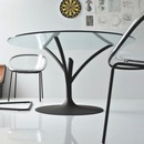 Acacia table calligaris
