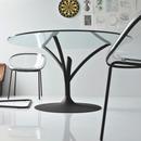 Acacia table calligaris